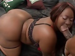 Ebony Bbw Blowjob Tube